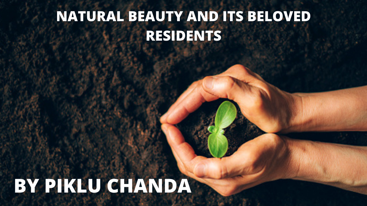 NATURAL BEAUTY AND ITS BELOVED RESIDENTS